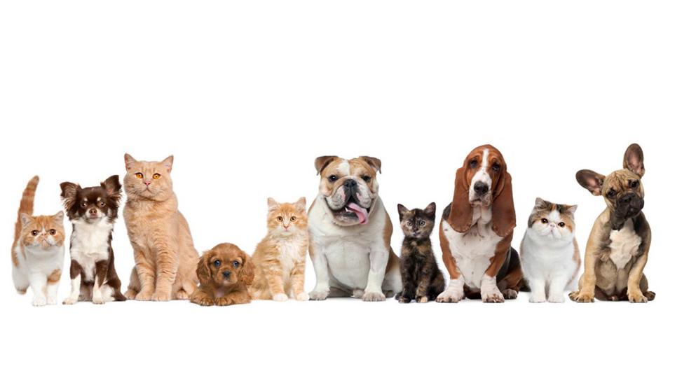 百補寵物中藥坊 - 了解更多可以你的寵物更健康的資訊